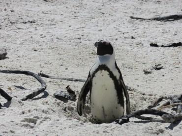 10milesbehindme_penguins12