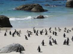 10milesbehindme_penguins3