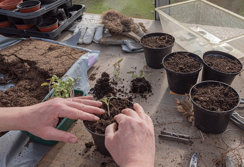 Touch Me Not Plant and Soil Selection