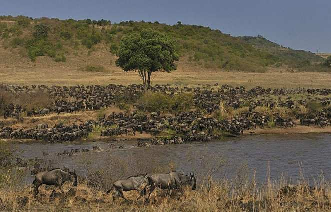 Most Famous Natural Landmarks In Africa: Masai Mara, Kenya