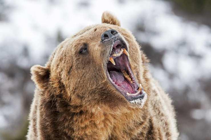 Canada Most Dangerous Wild Animals