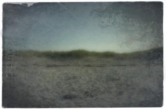 sea grass 128