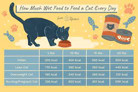 How much dry cat food per day
