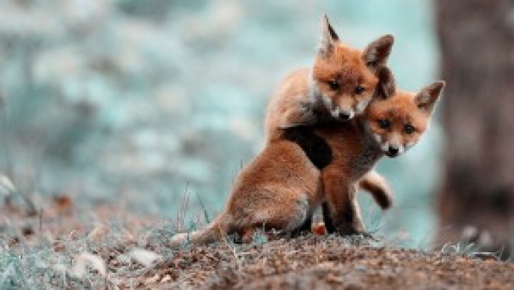 I was going to call out several FB pages/people but we here at 10th Year Seniors really don't want that problem so here's a picture of baby foxes. But you know who I mean though....you know who I mean.