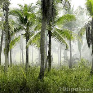 Palmiye ormanı