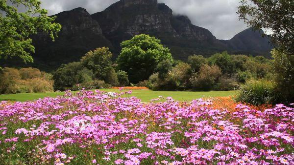 Kristenbosch, Cape Town, South Africa