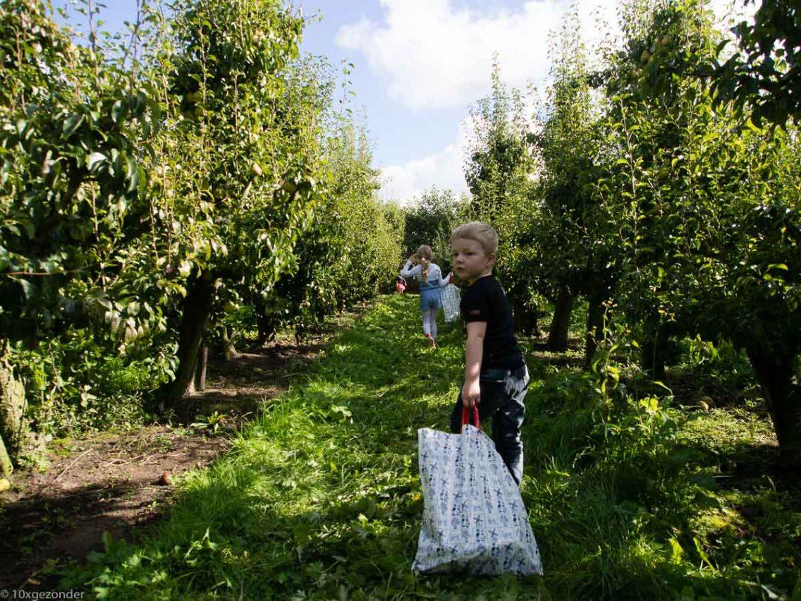 Appels plukken (1 van 1)-2