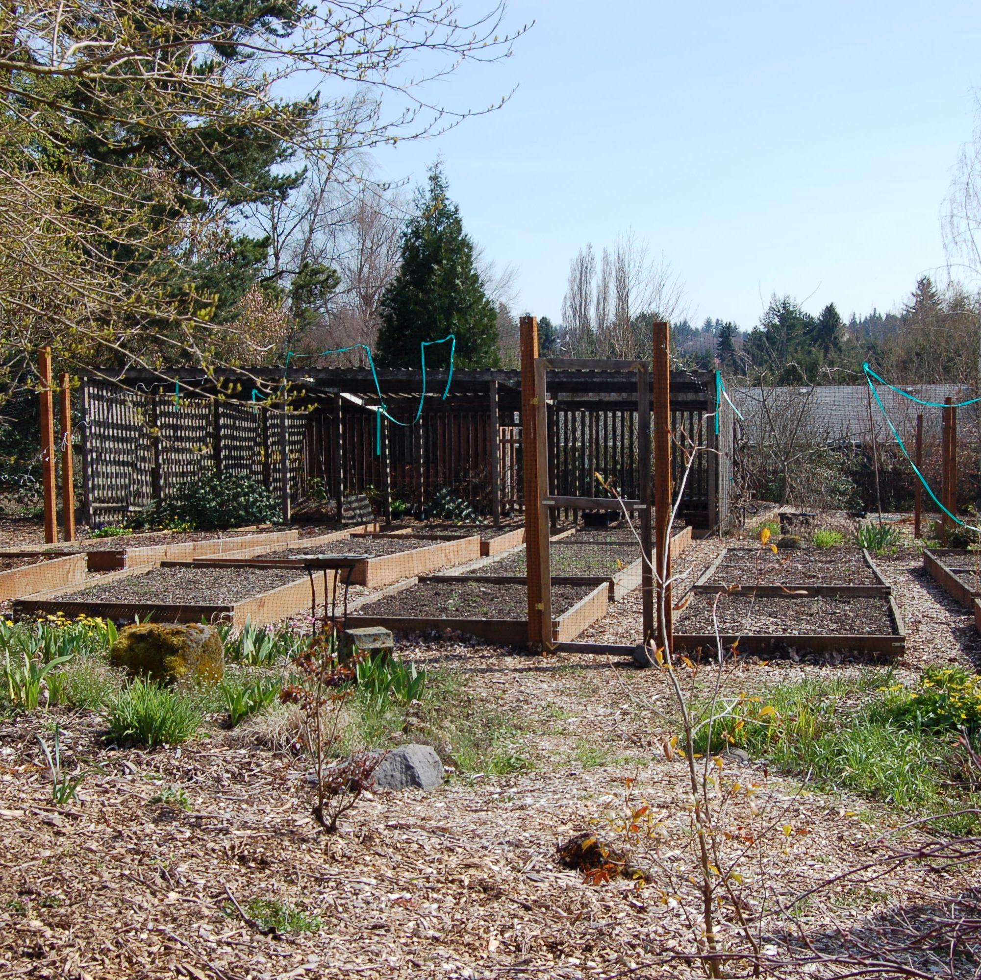 Raised bed garden in Beaverton, OR