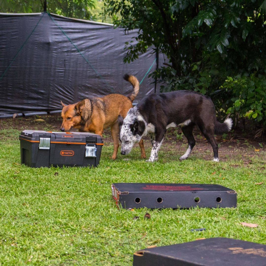 Dogs sniffing objects during the Super Sniffer class