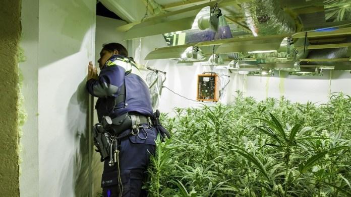 inspectie-hennepplantage-in-woning