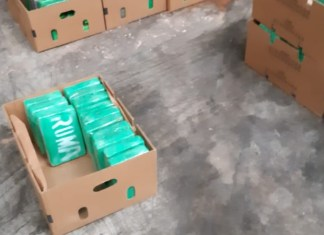 Cocaine antwerpen