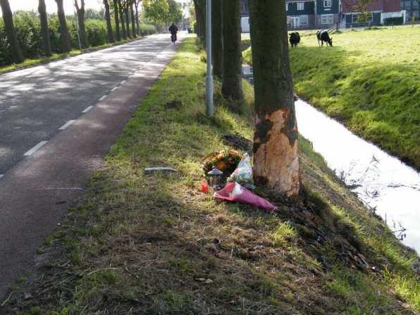 Bloemen bij de boom op Doctor Wijtemalaan Westwoud