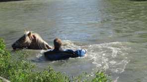 Het te water geraakte paard in sloot
