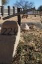 Cemetery of Namibian Revolution