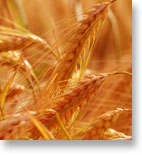 Oats Futures Trading