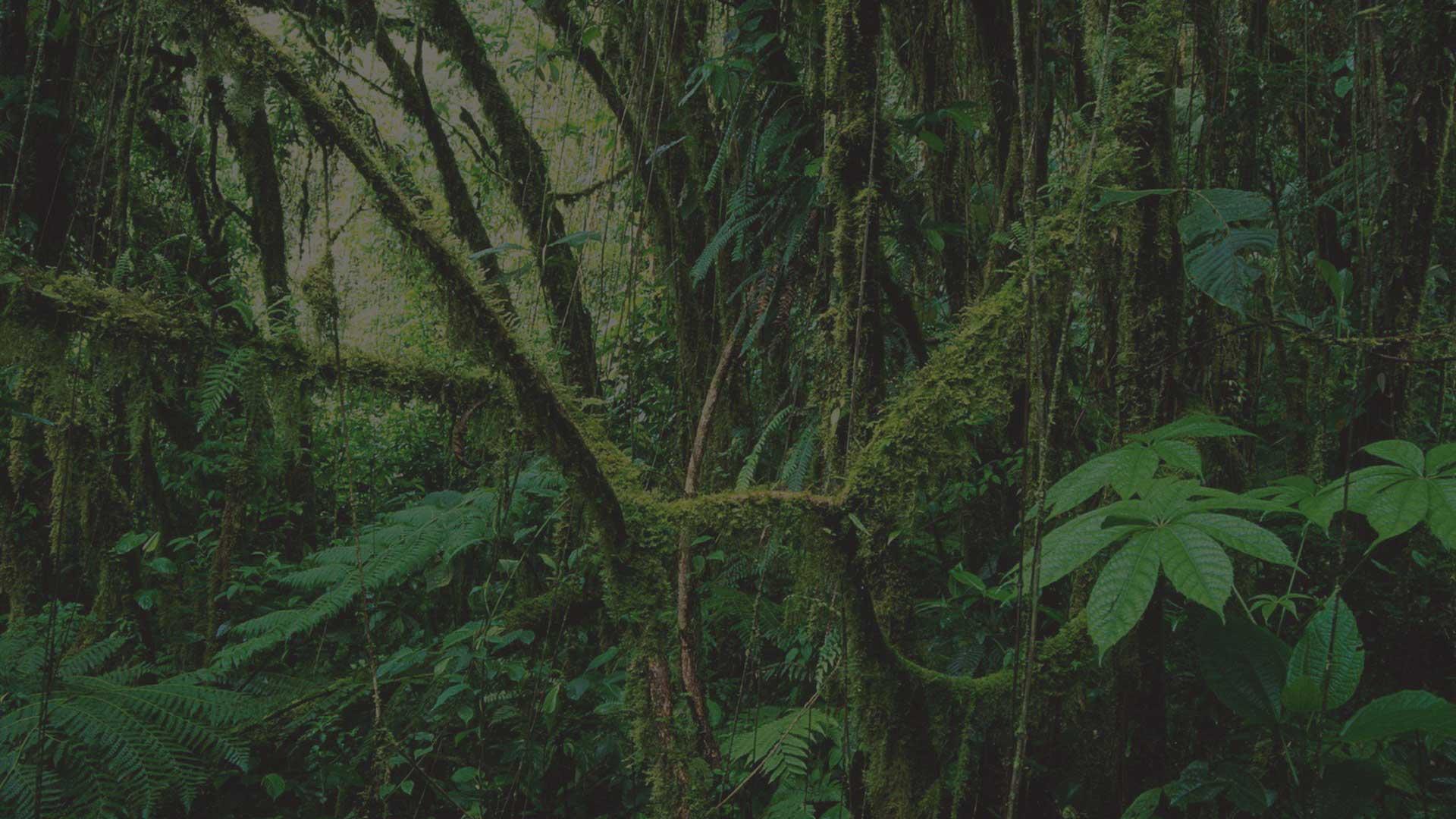 Rainforest-grey-tint_72dpi