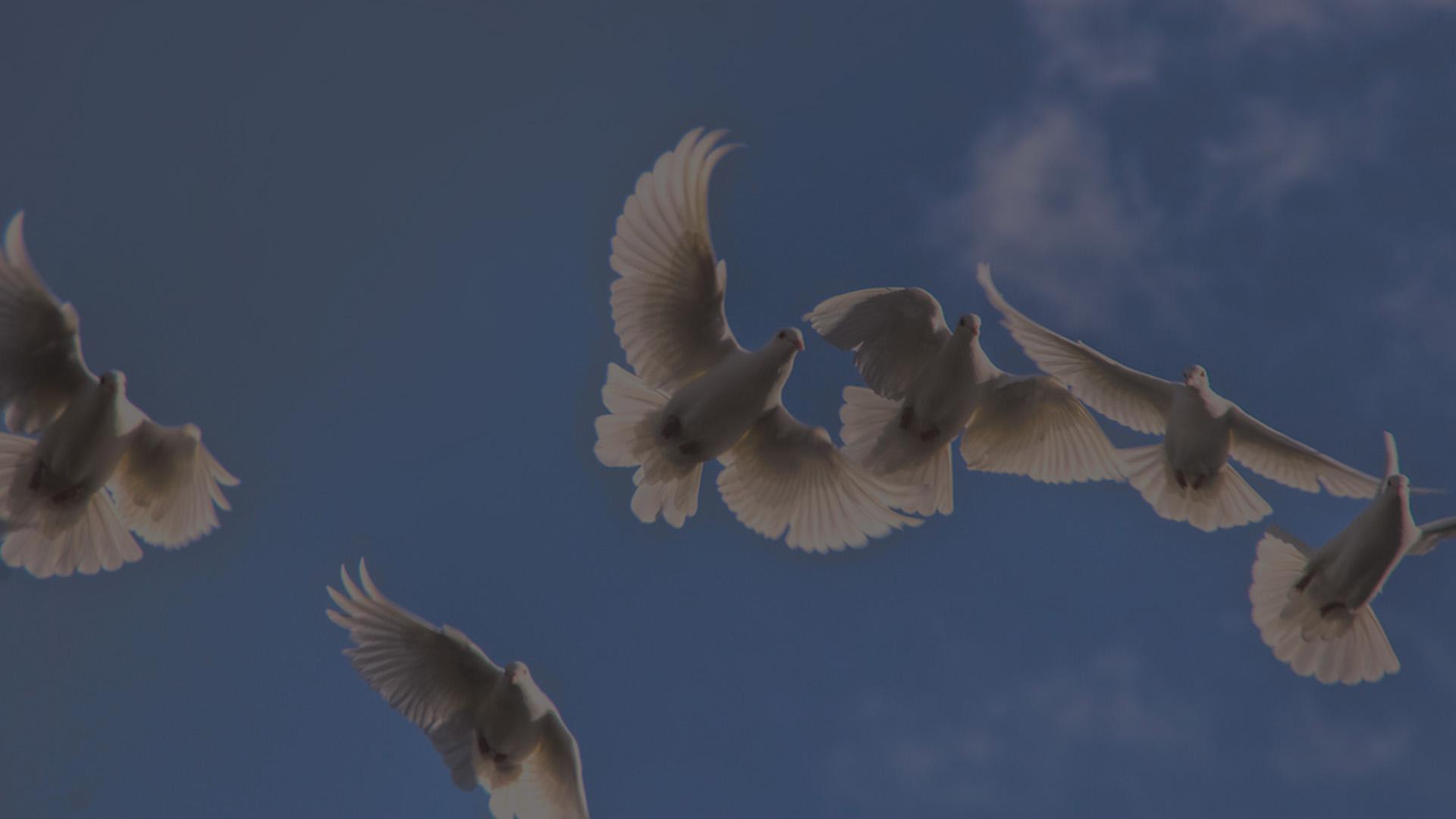 peace-dove-grey-tint-72dpi