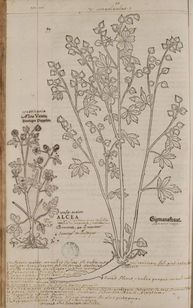 Historia Stirpium [MTCM, q.3.532]. Photo Médiathèque de Troyes Champagne Métropole