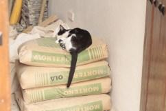 Sleepy feline, Havana Photograph: Georgia Korossi/11polaroids