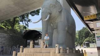 多摩動物公園のエントランスにある象