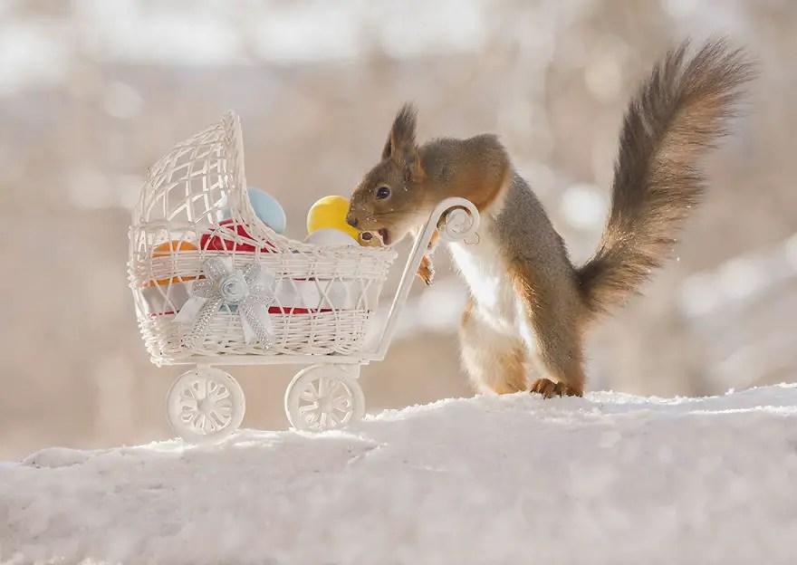How Store Fresh Food Animals