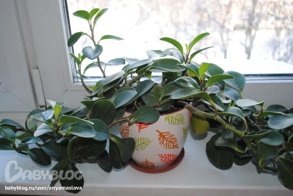 Комнатные Растения. Фото С Названиями