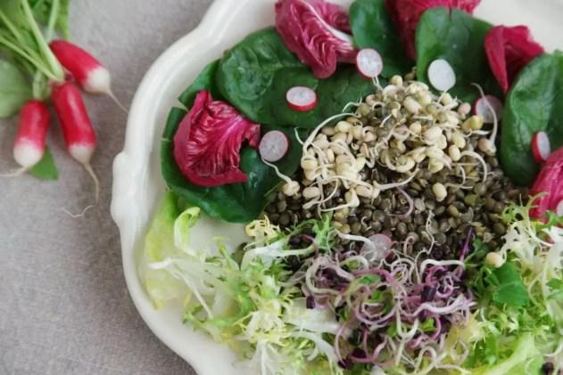 pousses de soja