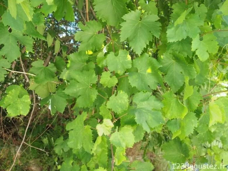 Feuilles de vignes farcies à la grecque