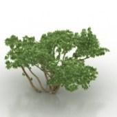 Green Shrub