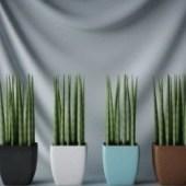 Colorful Interior Plant Bonsai Free 3dmax Model