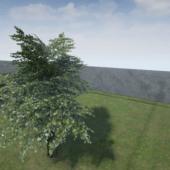 Low Poly Tree Oak