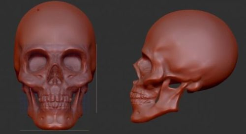 Skull Free 3d Model Ztl Download 13962 123free3dmodel - free 3d models skull