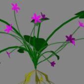Landscape Flower 12