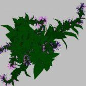 Nature Flower 21