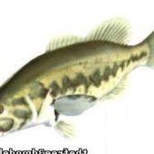 Lm Bass Fish