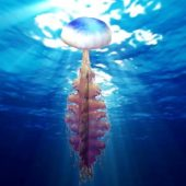 Ocean Jellyfish Animal