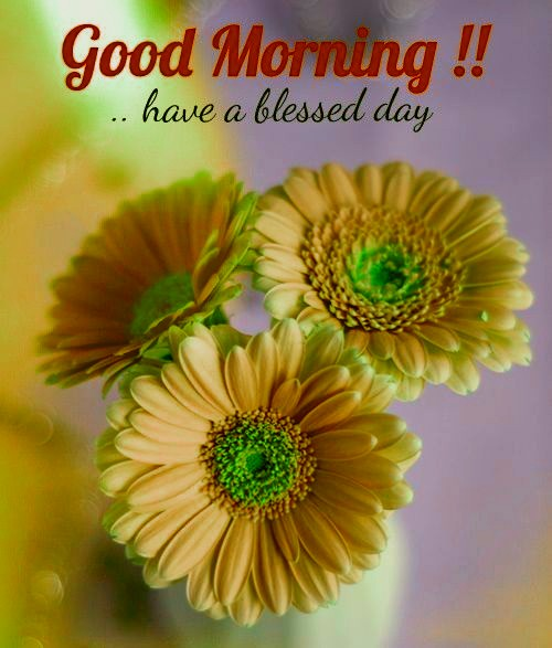 Á… Top 55 Good Morning Images With Flowers Hd Pictures