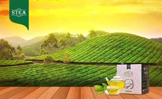 teh hijau stea