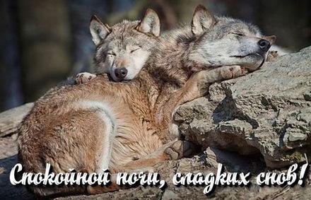 Красивые волчки видят сладкие сны. Спокойной ночи ...
