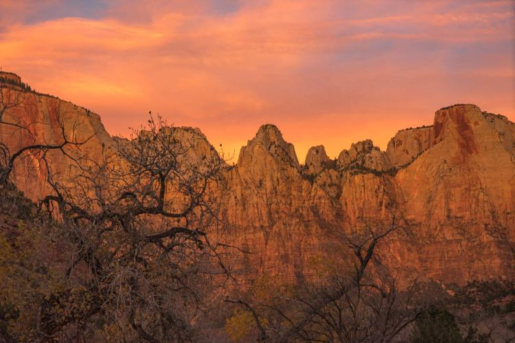 zions 115