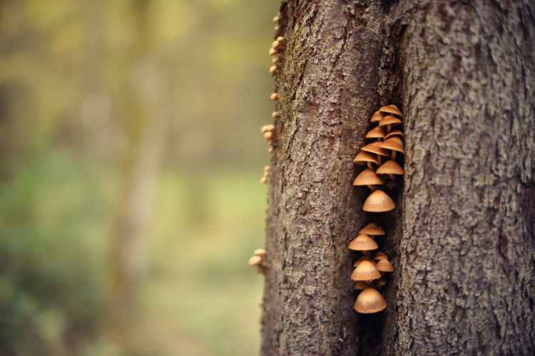 closeup photo of mushrooms on tree trunk