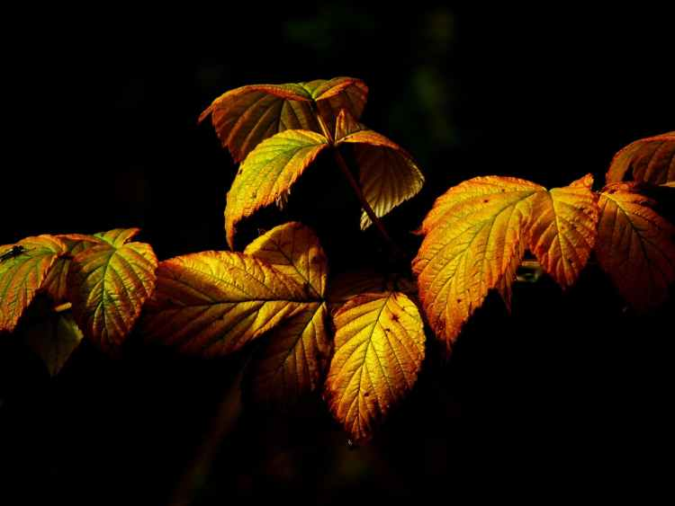 nature yellow plant leaves