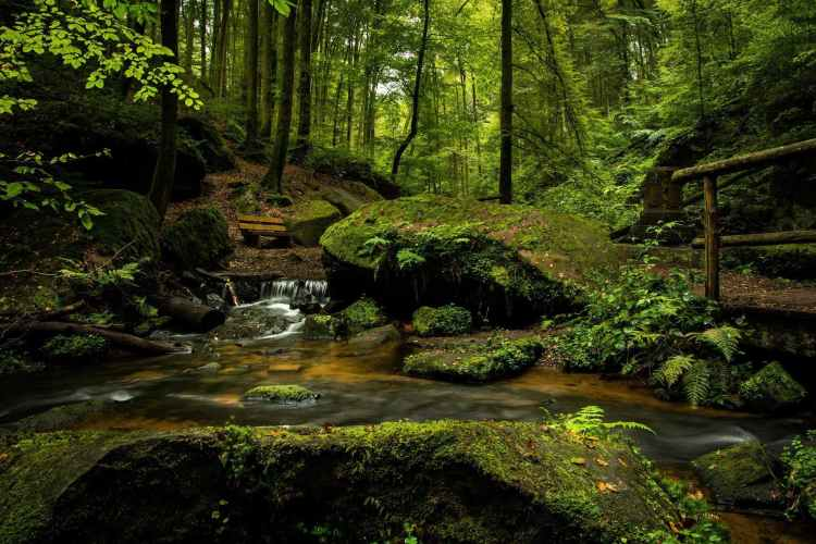 bench cascade creek environment