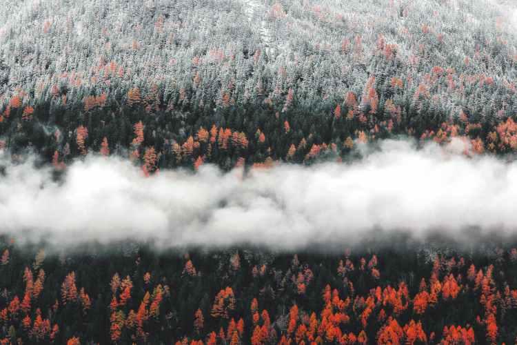 photo of orange trees