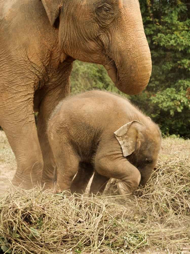 photo of elephants on grass
