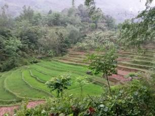 Paysage de rizières en escalier