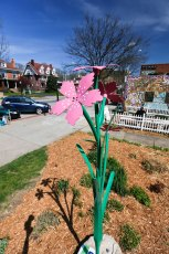 This beautiful Deptford Pink Sculpture is located at Angel's Falls Coffee, 792 W. Market St., in Highland Square.