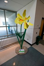 The 7 ft.-5 in. Yellow Flag Iris greets visitors inside the Akron-Summit County Library.