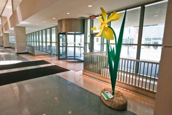 Yellow Flag Iris at Akron-Summit County Library