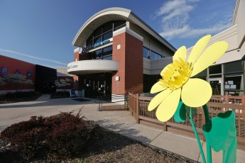 Lesser Celandine greets visitors to the City of Green YMCA on Massillon Road.